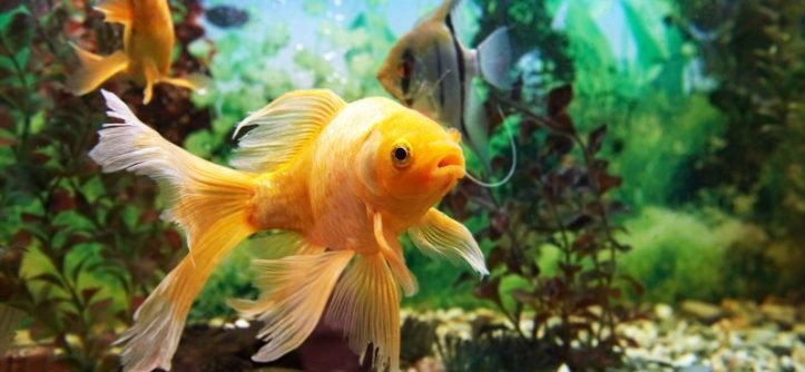 Do fish drink water